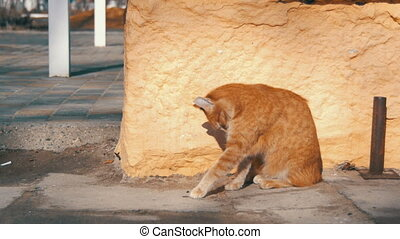 Red Homeless Cat on the Street in Early Spring.
