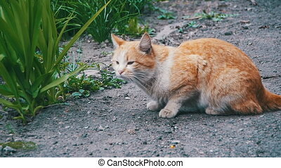 Red Homeless Cat on the Street in the Park. Slow Motion 96...