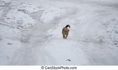 red homeless dog running through the snow winter. the problem of homeless pets