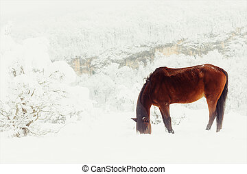 red horse earn their provender from under the snow on a mountain pasture in winter