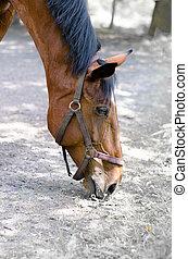 red horse eats grass.
