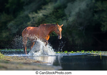 Red horse in water