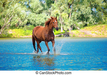 red horse is running in the blue water