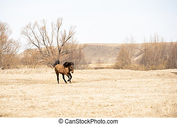 Red horse runs across the field on a spring day