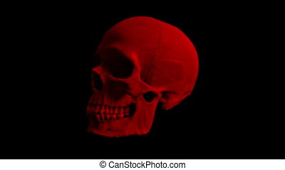 Red Human Skull Rotating Loop - Adult human skull turning...
