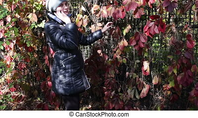 Red ivy leaves in autumn park - beautiful fence of red ivy...