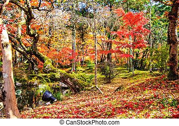 red japanese maple autumn fall , momiji tree in kyoto japan