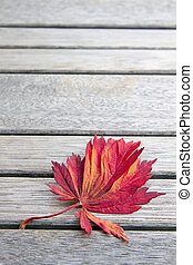 Red Japanese Maple Leaf on Wood Bench Background