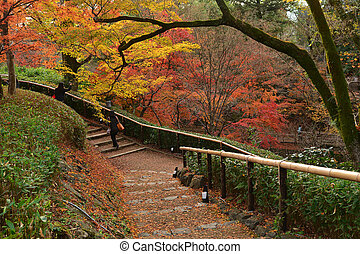 Red Japanese Maple Tree in Autumn Scenery