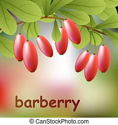 Red, juicy barberry on a branch for your design. Vector