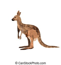 Red kangaroo carrying a cute Joey, isolated on clean white