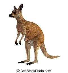Red Kangaroo with Baby - 3D digital render of a red kangaroo...