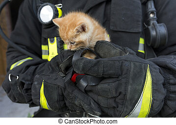 kitten in the hands of a lifeguard