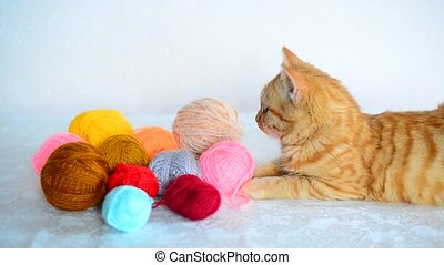 Red kitten lies near colored yarn for knitting. - A red...