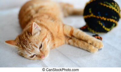 Red kitten lies near tangle with woolen knitting threads - A...