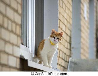 Red kitten on window