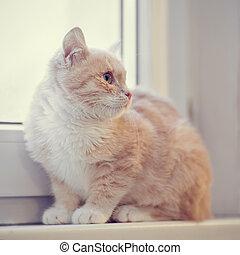 Red kitten sits on a window sill
