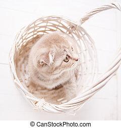 Red kitten sitting in a basket. Thoroughbred cat. Pet