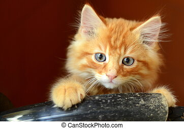 Red Kitten - Cute Fluffy Ginger Kitten With Copy Space