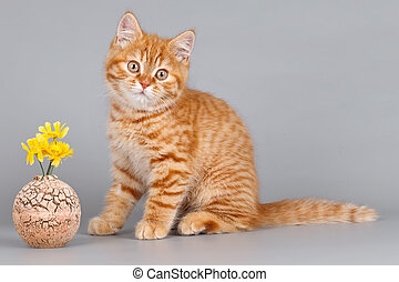Red kitten with flowers on grey background
