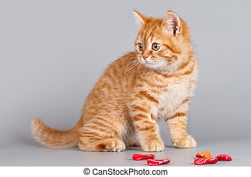 Red kitten with stones on grey background