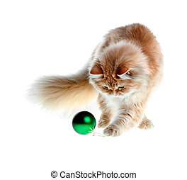 red kitten worth playing new year's green ball isolated