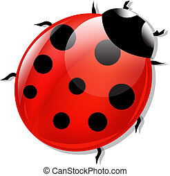 Lady Bug - Red Lady Bug, Isolated On White Background, ...