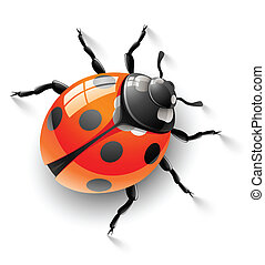 red ladybird illustration, isolated on white background