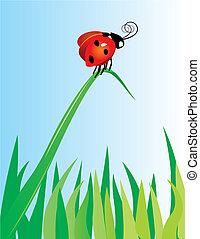 red ladybird on green grass