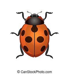 Red Ladybug on White Background. Vector