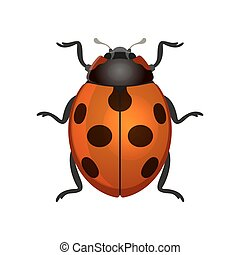 Red Ladybug on White Background. Vector