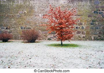 Red leaf alder tree against fresh snow