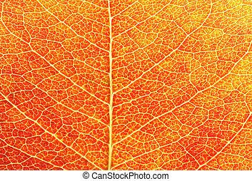 Red Leaf Closeup