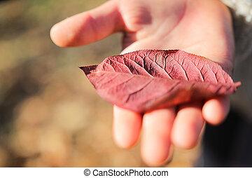 Red leaf. Girl holding a red leaf.