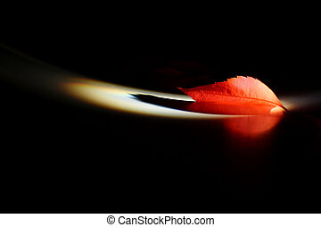 red leaf illuminated by a narrow ray of light