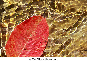 Red leaf in the water
