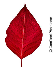 Red leaf isolated on white .