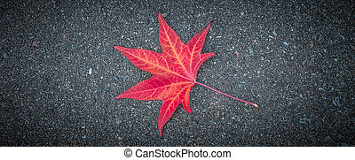 Red leaf of a tree lies on the gray textured asphalt.