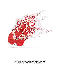 Red leaf of heart on white background