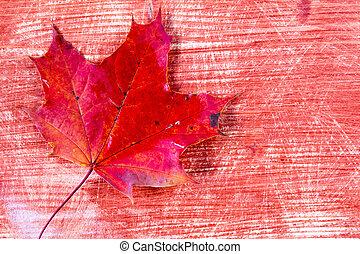 Red leaf over wooden background