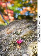 Red Leaf Resting on a Stone