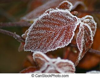 red leave with snow crystals