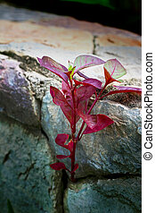 Red leaves background on stone