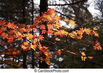 Red Leaves Branch in Fall Forest 1