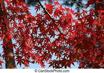 Brilliantly colored leaves.