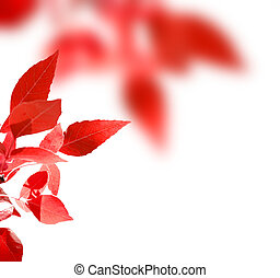 Red leaves in fall isolated on white background
