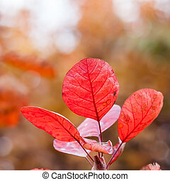 Red leaves in the autumn