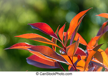 Red leaves in the sun on a green background.