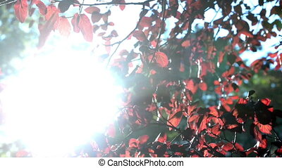 Red leaves of on a tree