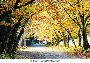 Red leaves of the maple in autumn Japan